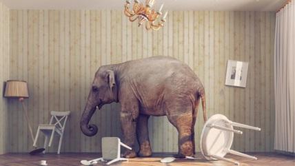 secondary elephant room